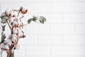 Dried white fluffy cotton flowers