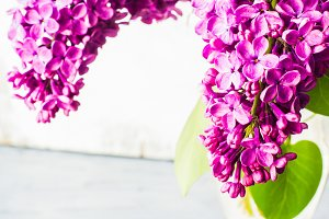 Lilac flowers in a spring concept