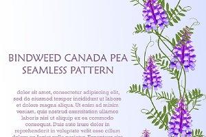 Bindweed seamless patterns