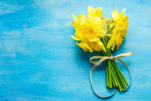 Daffodil flowers in a spring concept