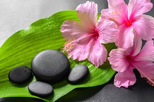 spa concept of pink hibiscus flowers