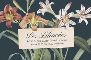 Les liliacees Flowers
