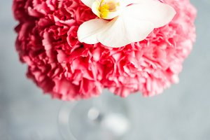 Floral concept with carnation