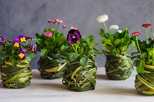 Floral concept with flowers in pot
