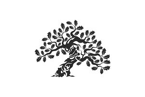 Isolated vector oak tree illustratio