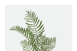 Illustration of leaf