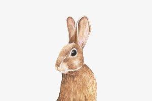 Illustration of rabbit
