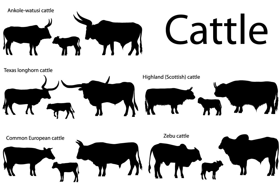 Silhouettes of cattle ~ Illustrations ~ Creative Market