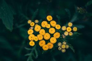 Yellow Flowers on Dark Background
