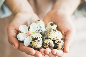 Quail eggs in hands of woman