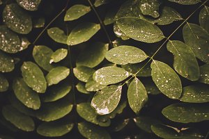 Wet Leaves in Vintage Colors