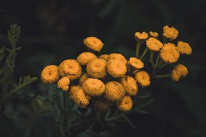 Yellow Flowers in Dark Moody Colors