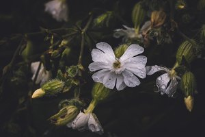 Wet White Flowers and Vintage Colors