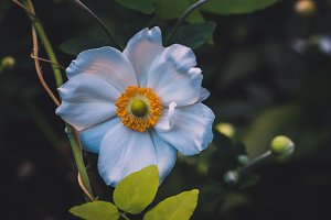 White Flower in Vintage Colors