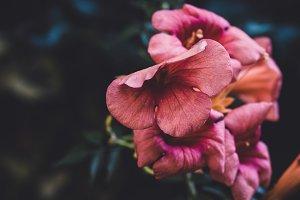 Purple Flower in Moody Colors