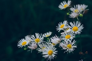 White and Yellow Flowers (Vintage)