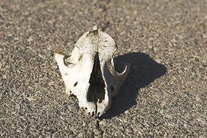 asphalt skull