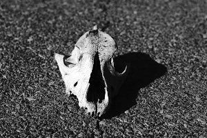 skull on the asphalt