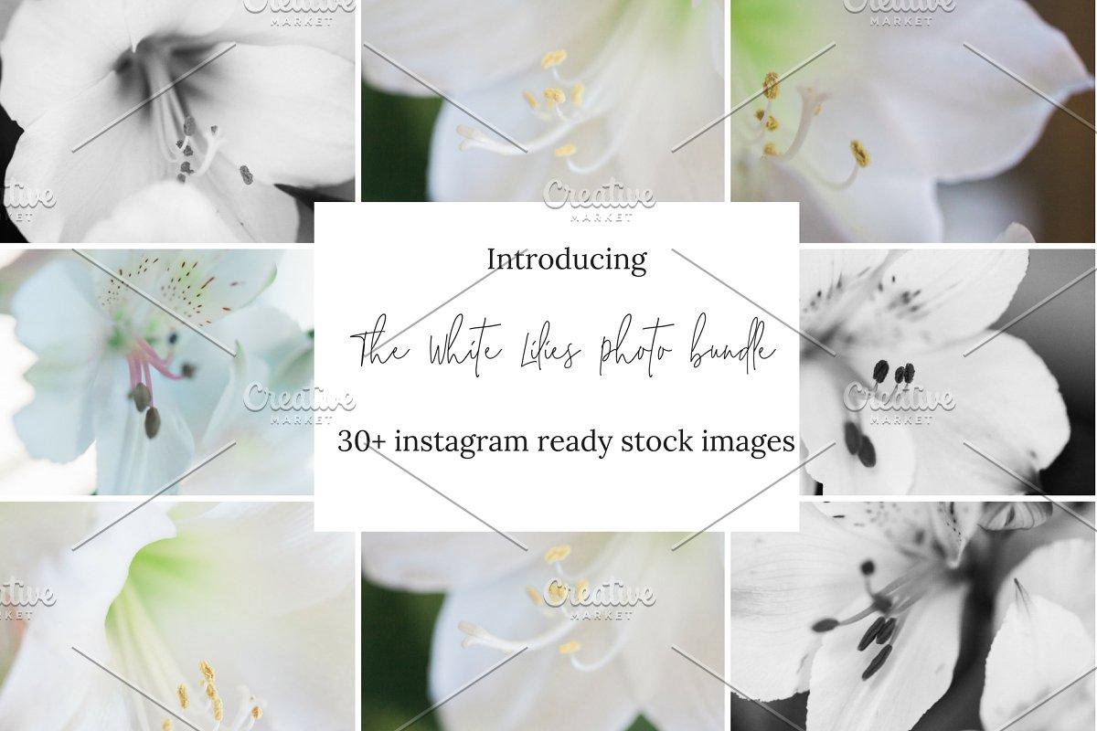 Floral Stock Photo Bundle