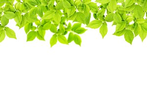 Green leaves Floral banner