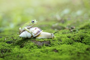 dumpy frog and snail,
