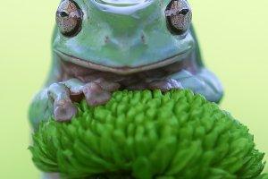dumpy frog, animal, mammal, frog,