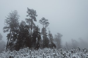 Foggy Forest Landscape with Snow