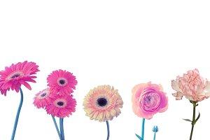 carnation, anemone, gerbera flower