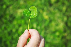 Clover leaf. Happy St. Patrick's Day
