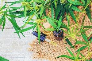 Cannabis herb