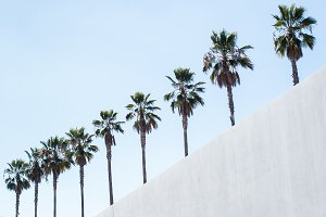 Palm Trees with a diagonal wall