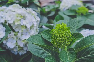 Green flower petals