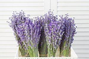 Lavender flowers in closeup.