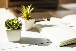 Succulents on the desktop