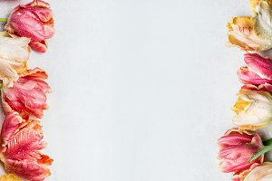 Colorful tulips, springtime banner
