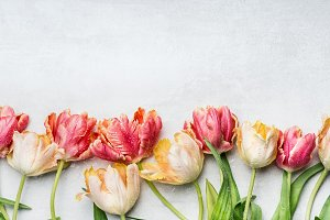 Tulips with water drops, border