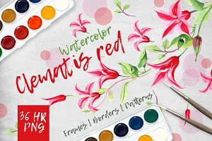 Clematis red PNG watercolor set