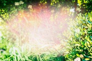 Green summer day with wild grass