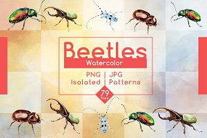 Beetles JPG watercolor set