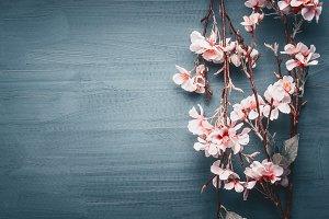 Spring blossom on dark blue
