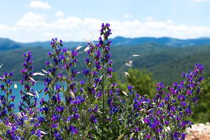 Wildflowers in the mountains