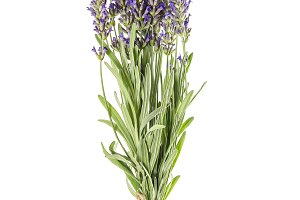 Lavender bunch flowers