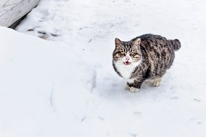 Pretty adult cat in snow