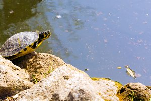 Turtle near the water