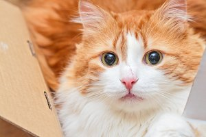 Cat with scratch on nose in box