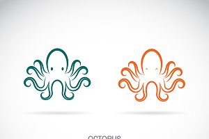 Vector of an octopus design. Animal.
