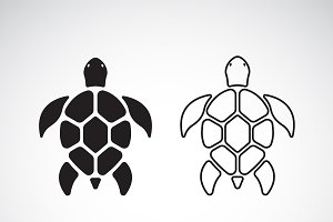 Vector of turtle design. Animal.