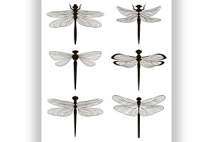 Set of silhouettes of dragonflies