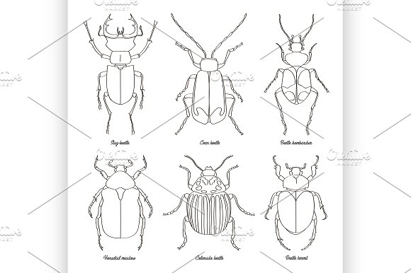 Set Of Beetle Illustrations