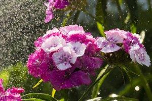 Summer rain in the gard